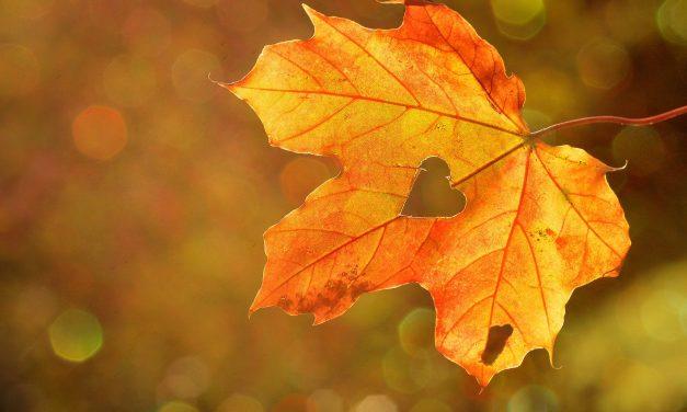 Energía Octubre 2020 «El otoño del renacimiento»
