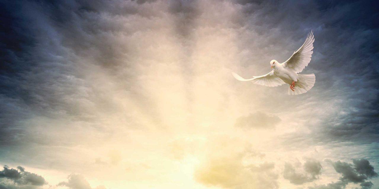 Mensaje Maestro Jesús. «La verdad que os hará libres»